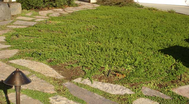 Lawn Alternatives, Ground Covers